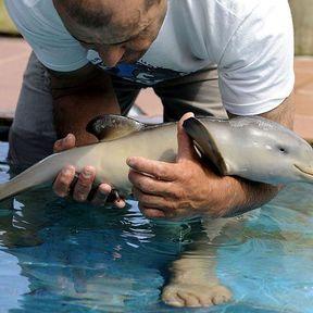 Le bébé dauphin