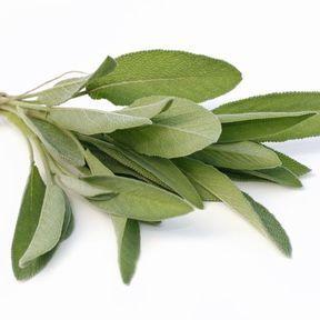 Des feuilles de sauge anti-transpiration