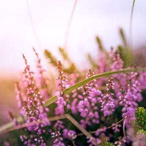 Plantes et astuces contre la rétention d'eau