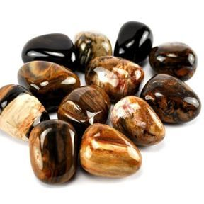 Le bois fossilisé pour une meilleure stabilité