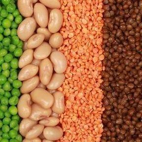 Les légumes secs