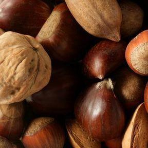 Les noisettes, noix, amandes, pistaches, noix de cajou, châtaignes