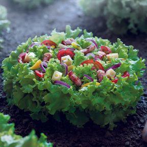 Salade du champs