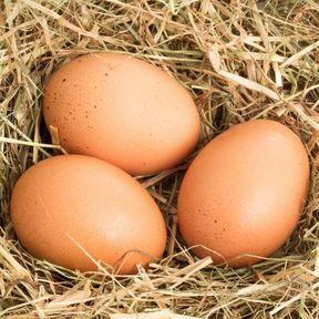 Les œufs