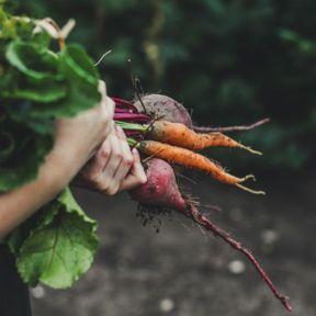 Potager City, pour des variétés de fruits et légumes anciens
