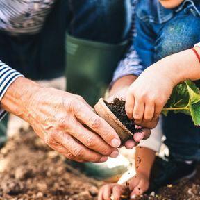 Créez un potager en famille