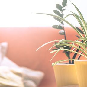 Placer des plantes dépolluantes dans votre intérieur