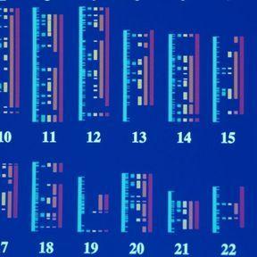 Les premières cartes du génome