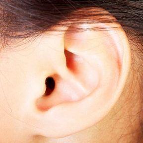 Le muscle qui permet de bouger les oreilles