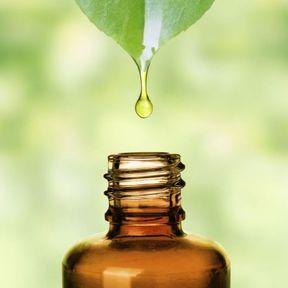 L'huile essentielle de Ravintsara
