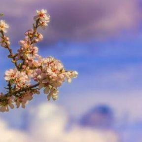 Informez-vous sur le taux de pollen tous les jours