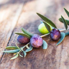 L'olive en fleur de Bach