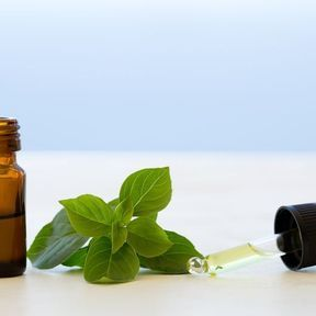 L'huile essentielle de basilic