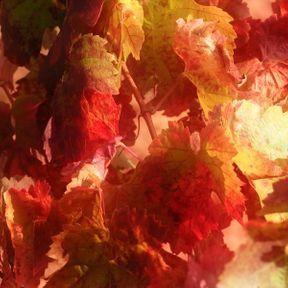EPS de vigne rouge et de marronnier d'Inde