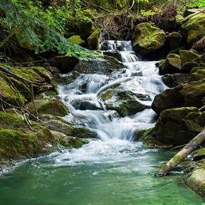 Rock water en fleur de Bach
