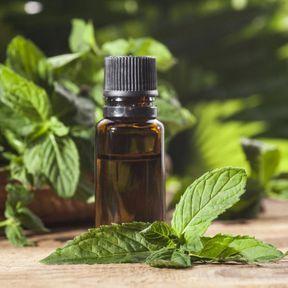 De l'huile essentielle de menthe poivrée