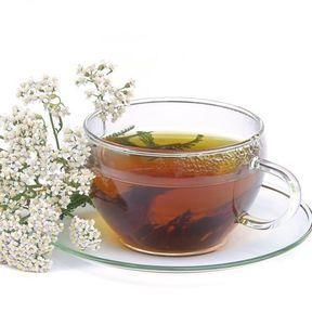 Une infusion d'achilée mille-feuille (Alchillea millefolium)
