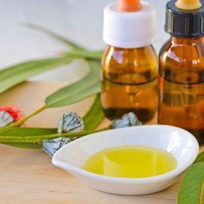 L'huile essentielle d'Eucalyptus radiata (ou Eucalyptus radié)