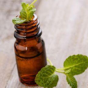 Quelques gouttes d'huile essentielle de menthe poivrée
