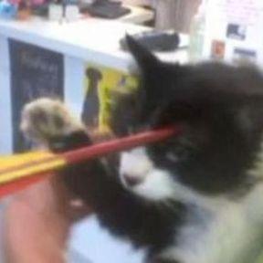 Une flèche dans le crâne d'un chat