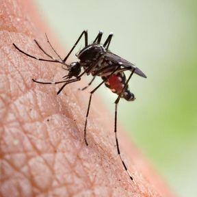 Remèdes naturels contre les piqûres d'insectes