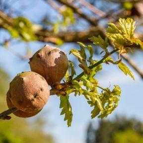 Oubliez les remèdes avec des nids de guêpes