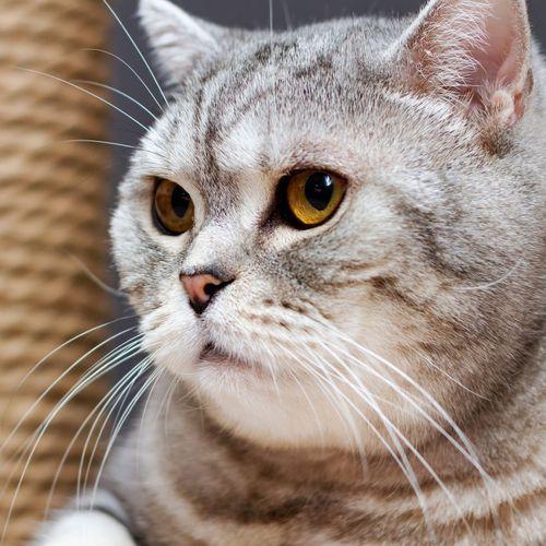 Défigurée après avoir été griffée par son chat