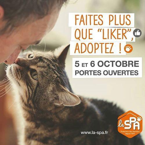 """""""Faites plus que liker, adoptez !"""" , la SPA en campagne pour sensibiliser les internautes"""
