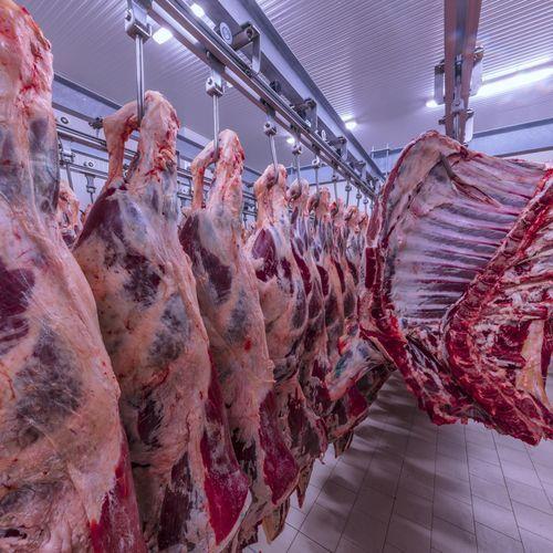 Viande avariée polonaise : 150 kilos ont été vendus à des consommateurs