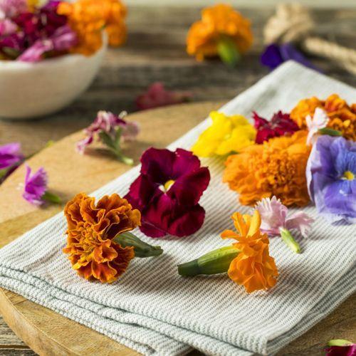 Nutrition : Ces fleurs comestibles qui peuvent être toxiques