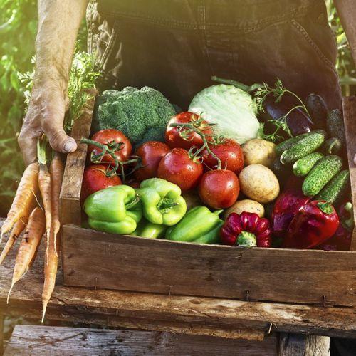 Pesticides : le métam-sodium indésirable dans les champs de l'Hexagone