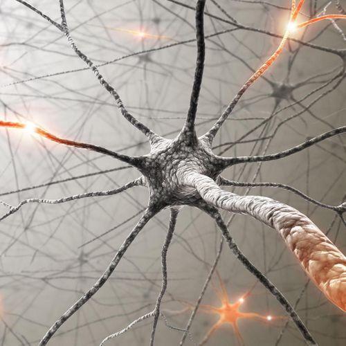 Nos fonctions cognitives juvéniles prédisent nos capacités mentales à l'âge adulte