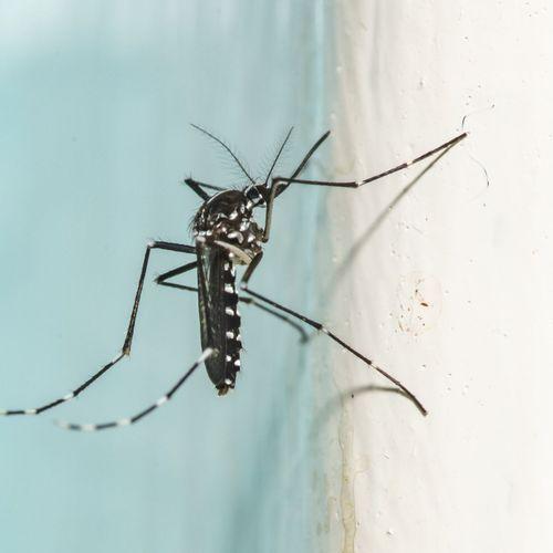 18 cas de dengue confirmés en région PACA