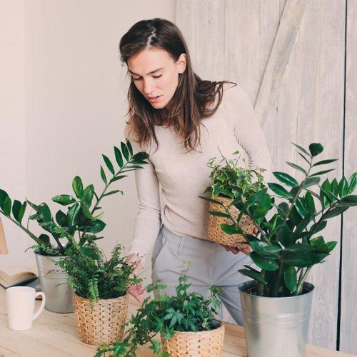 Une efficacité mitigée des plantes d'intérieur dites dépolluantes